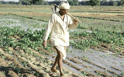 खेतीपूरक उद्योगों से किसान बढ़ाएं अपनी आय