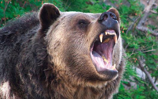 भालू के हमले में किसान जख्मी