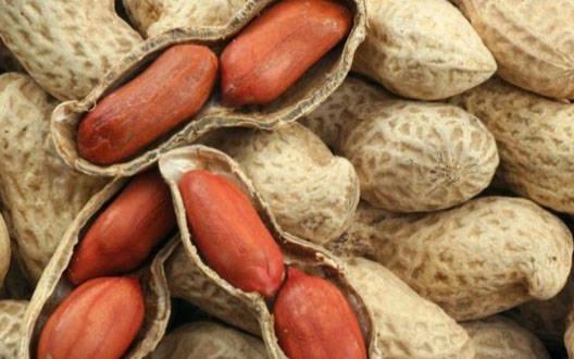 मूंगफल्ली के दाम घटा कर किसानों की लूट, हो रहा नुकसान