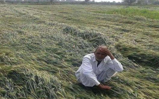 खामगांव-किसानों को दिया जाए मुआवजा