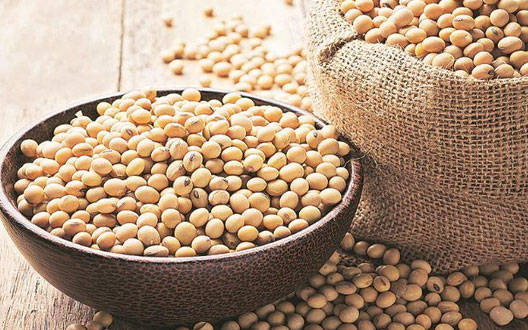 Soybean price rises on buying fresh deals
