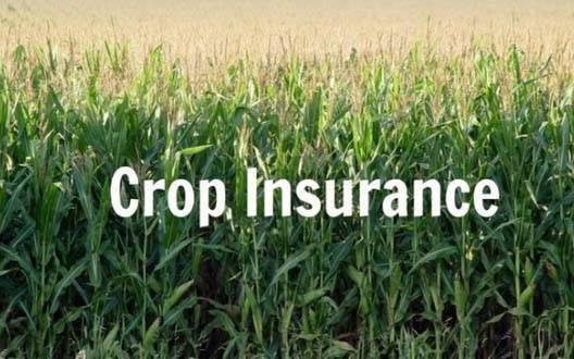 19,000 किसानों को फसल बीमा की प्रतीक्षा