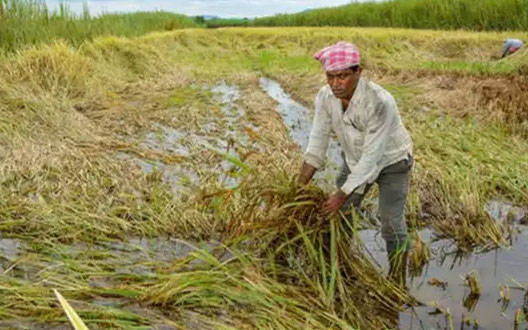मुआवजे की रकम किसानों के खाते में जमा करें
