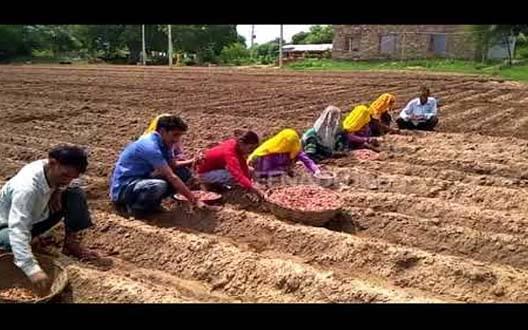 सुनगाव में किसानोको बुआई संदर्भ में मार्गदर्शन