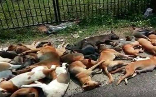 बुलढाणा में कम से कम 90 कुत्तों को मार डाला गया
