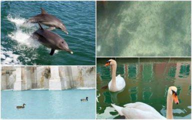 कोरोना वायरस: वेनिस कॅनल में वापस लौटे डॉल्फ़िन, स्वान और मछलिया