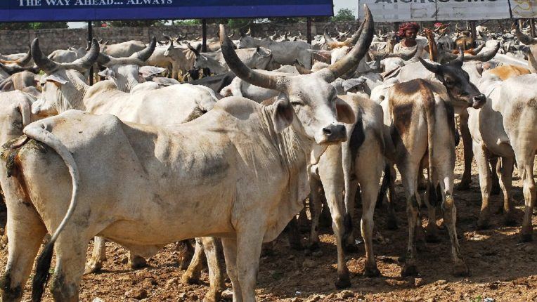 Truck loaded with cow dynasty, 3 arrested, 20 lakh goods seized