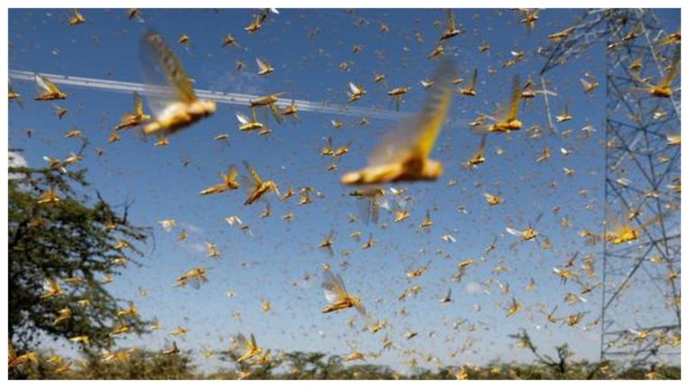 Desert locust teams may move from East Africa to India, Pakistan next month: UN officials