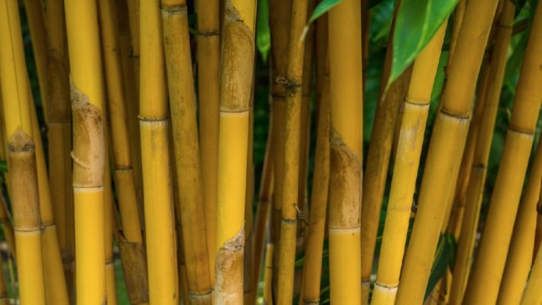 Poor bamboo supply, anger among businessmen