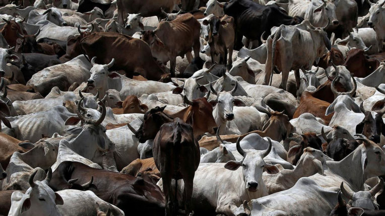 Animals are sick due to change in weather, demand for free medicine supply