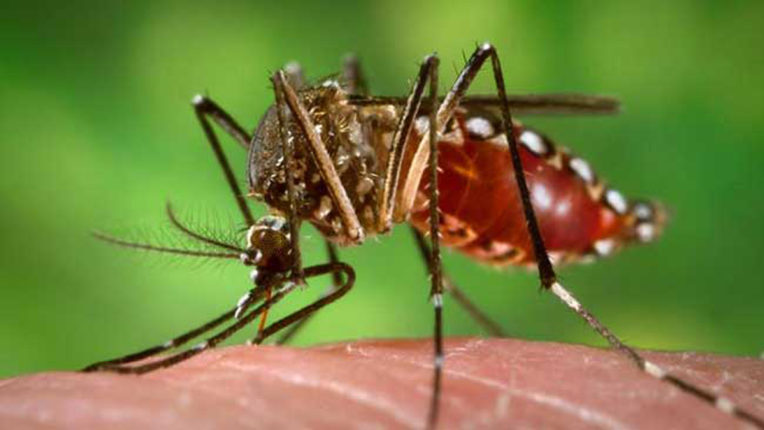 Now the danger of dengue is also increasing, water stored in the coolers