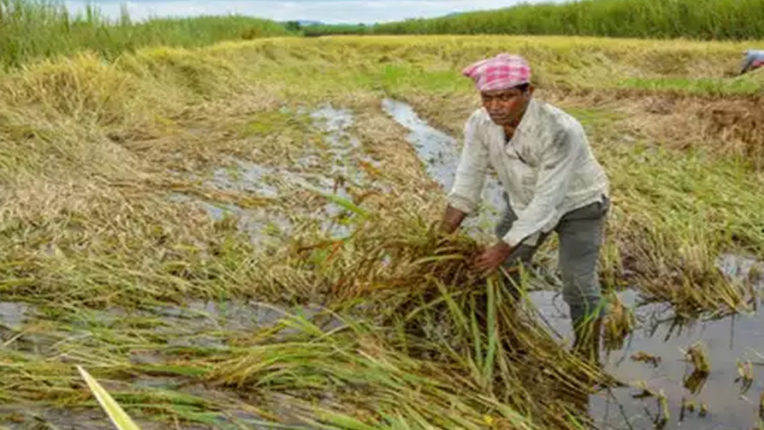 Help of 9.89 lakhs to farmers, crops were damaged due to rain