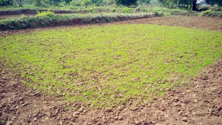 हजारों हेक्टेयर पर खेती, एक भी सिंचाई बांध नहीं