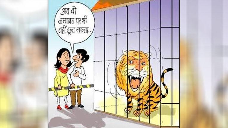 nishanebaaz-man-eater-tiger-sentenced-to-life-in-captivity-madhya-pradesh