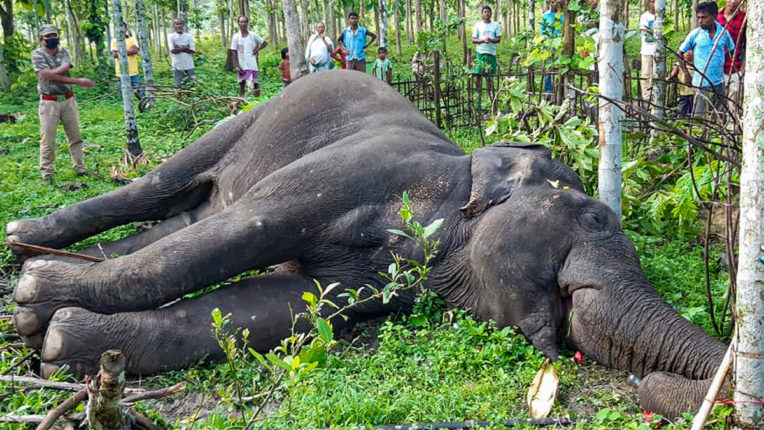 Elephant Death Kerala