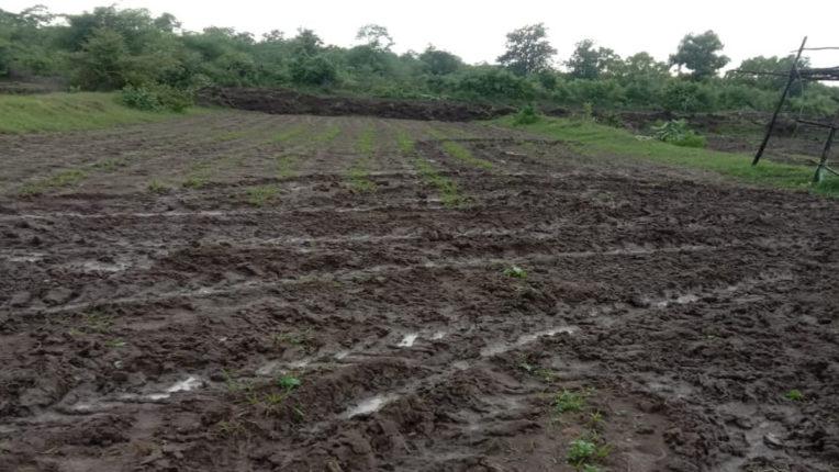वन दावे के अतिक्रमित खेती पर वनविभाग ने चलाई जेसीबी