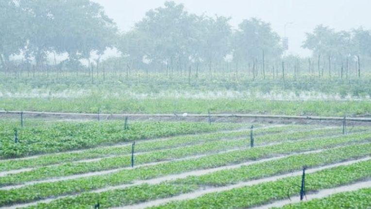 मूसलाधार बारिश से किसान हर्षित