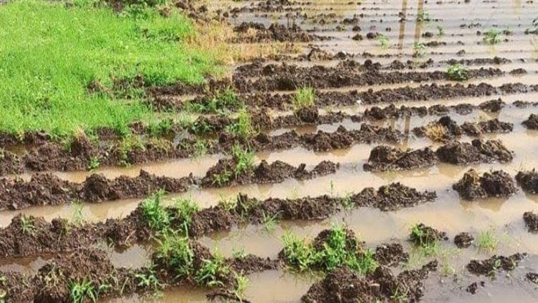 मूसलाधार बारिश से फसलों और घरों की भारी तबाही