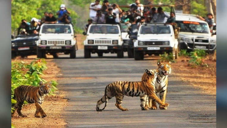 2 gates of Tadoba closed, Mohurli and Madanapur village passed resolution