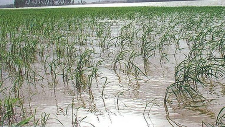फसल की चिंता में डूबा किसान, नाशिक ज़िले से रूठी बारिश