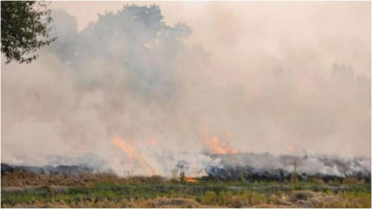 The court asked the states about the arrangements to prevent stubble burning