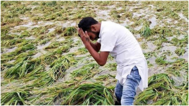 Urea eclipse on paddy crop in UP, black marketing increased