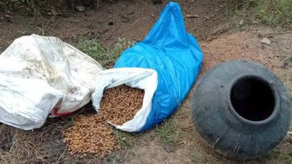50 kg Mahua Sadva destroyed