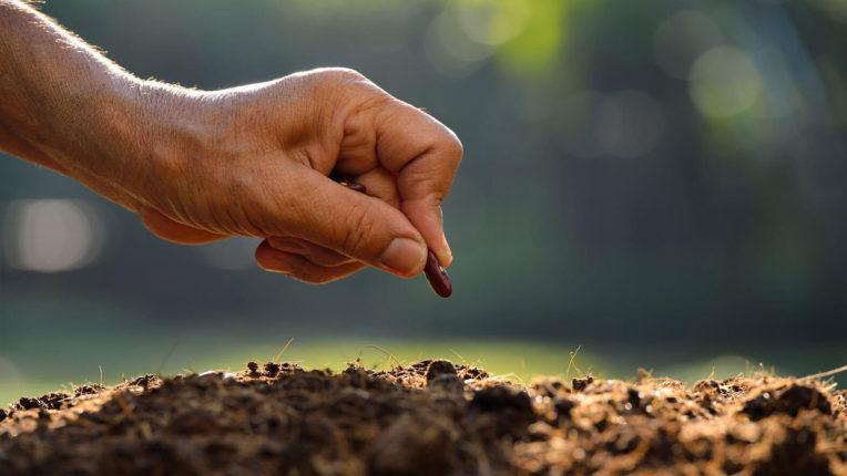 बोगस बीजों ने बढ़ाई किसानों की चिंता