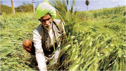 केंद्र सरकार का किसानों को तोहफा, खरीफ फसलों का बढ़ाया एमएसपी, यह होंगी नई दरें