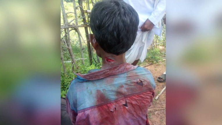 Tiger Attack in Sindewahi