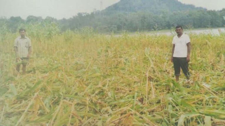 Wildlife damages Crop