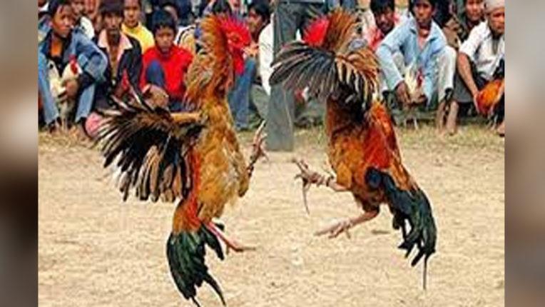 मुर्गा बाजार पर छापा पुलिस ने मारा छापा