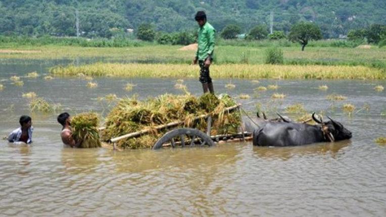 पटवारी की लापरवाही के कारण बाढ़ प्रभावित किसानों की परेशानी बढ़ी