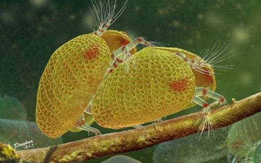 myanmaar--sperm