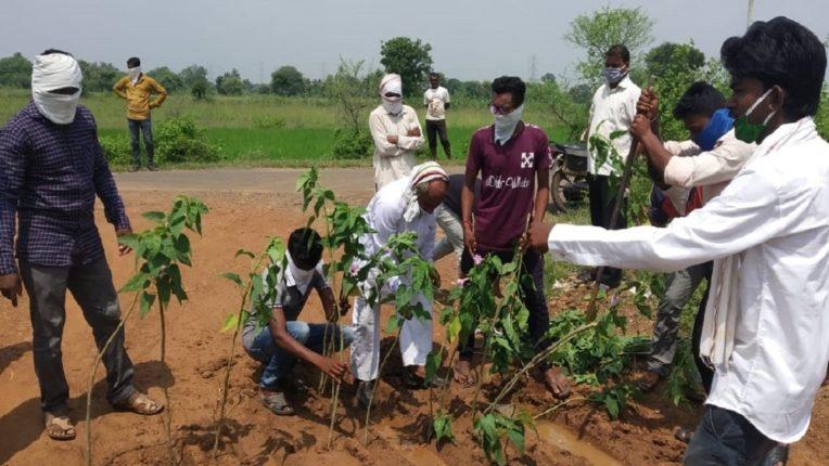 ग्रामीणों ने गड्ढों में बेशरम लगाकर किया अनूठा आंदोलन