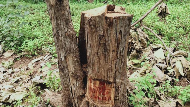 वनकर्मी लिप्त होने का आरोप, सागौन तस्करी का मामला
