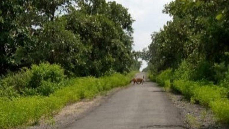 मारेगाव तहसील के वाघदरा मे दिखा बाघ