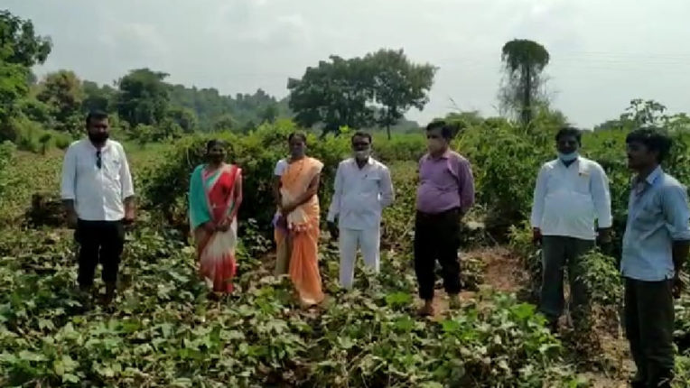 लगातार बारिश से किसानों के खेतों लगी फसलों को नुकसान