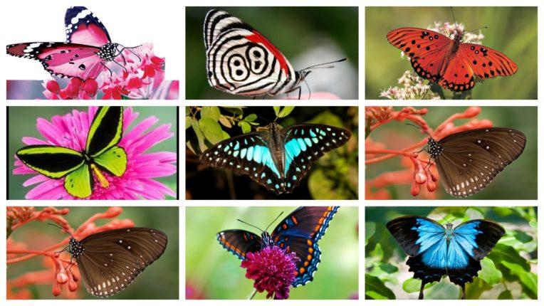 रंग-बिरंगी तितलियों को देखना है पसंद तो ज़रूर करें इन पार्कों की सैर