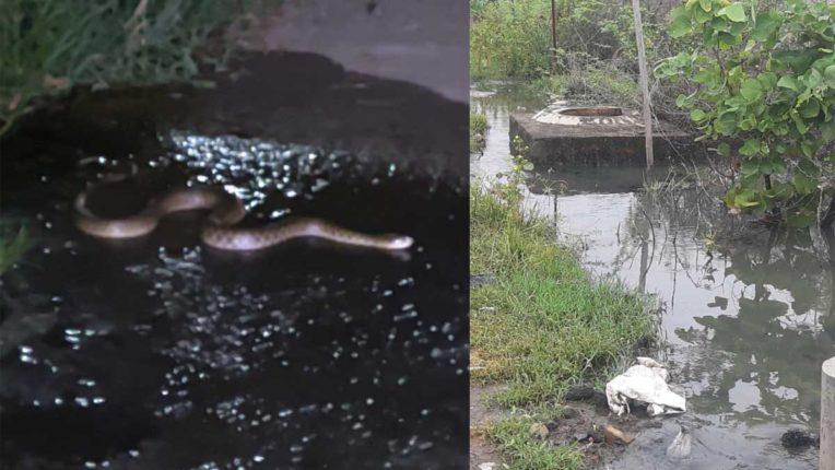 आर्यनगर में सीवर लाइन फूटी, रोड पर बहता है गंदा पानी