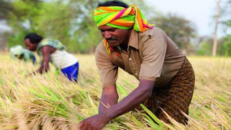 4500 किसानों को 21.5 करोड़ रुपए कर्जमुक्ति सहायक निबंधक ने दी जानकारी