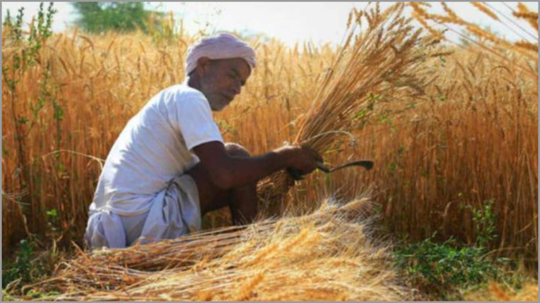 Paddy is sold out in UP, farmers forced by middlemen