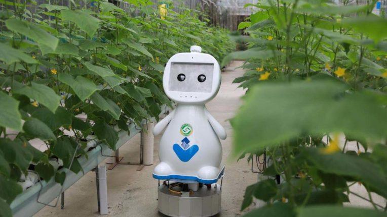 IIT खड़गपुर ने बनाया अनोखा रोबोट, पौधों के रोगों की करता है पहचान