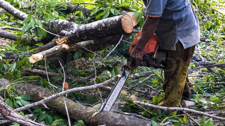 बगैर अनुमति के पेड़ काटने वालों पर मनपा दर्ज कराएगी FIR