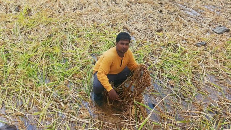 Farmer, Crop Damage 01