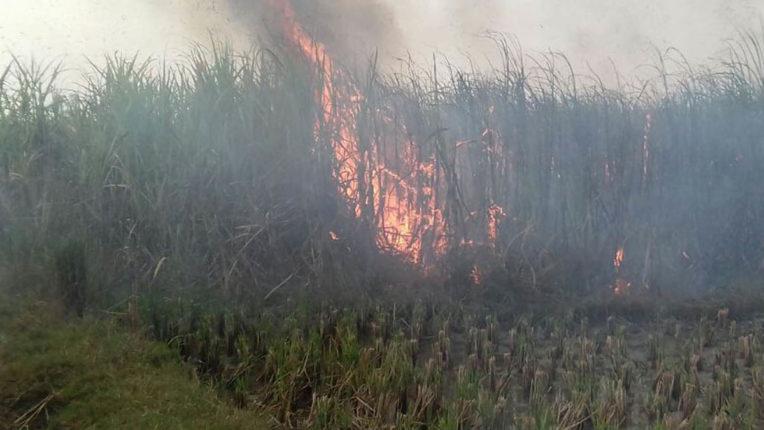 Sugarcane Farm Fire