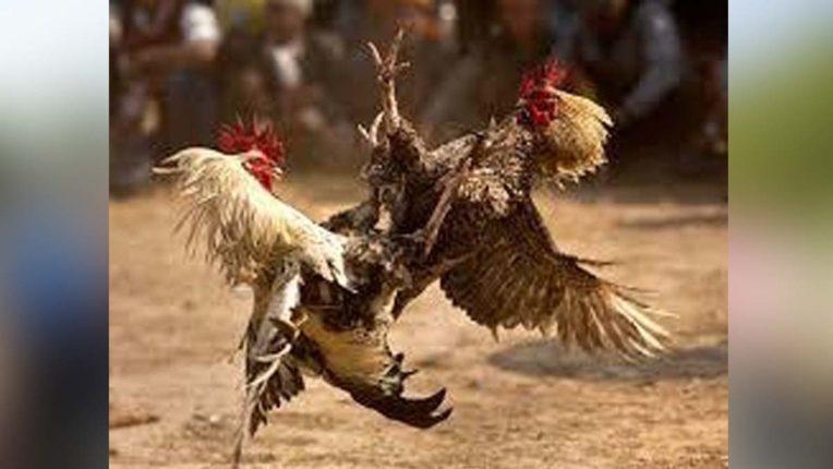 पुलिस ने मुर्गा बाजार पर मारा छापा, पांच आरोपियों समेत लाखों की सामग्री जब्त