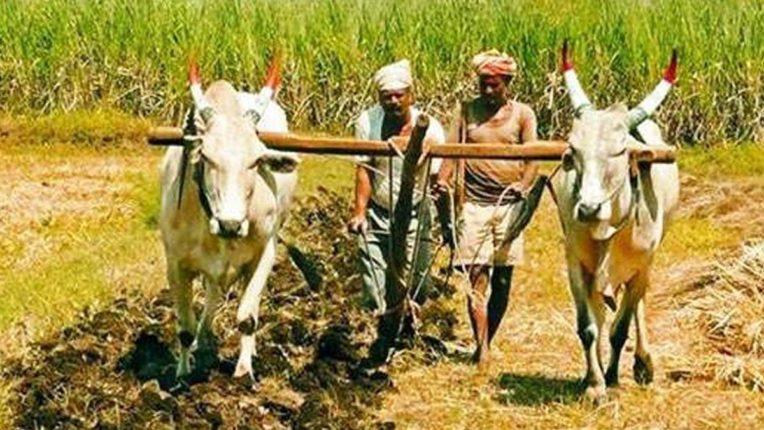 किसानों को नहीं मिला रहा विशेषज्ञों का मार्गदर्शन