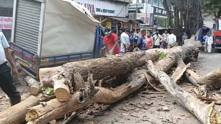 मार्ग किनारे पुराना पेड़ गिरा, टेम्पो क्षतिग्रस्त