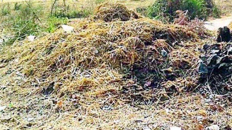 गोबर खाद के ढेर हटाए, मुरखला-कान्होली मार्ग की समस्या